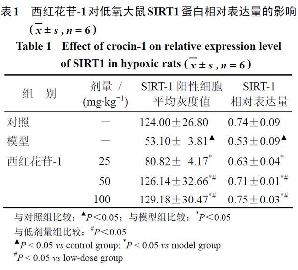 表1 西红花苷-1 对低氧大鼠SIRT1 蛋白相对表达量的影响