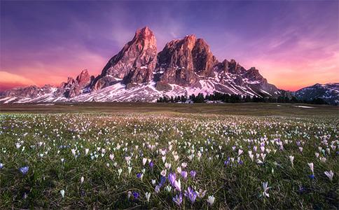 番紅花和雪山