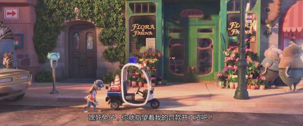 小猪的花店有番红花球茎出售