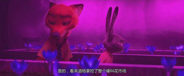 狐狸和兔子在赏花,哈哈~