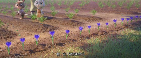 很漂亮的番红花