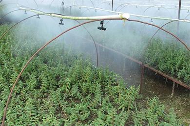 石斛采收季节的病虫害防治