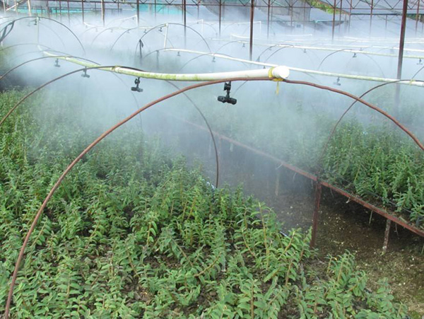 噴霧防治石斛病蟲害防治
