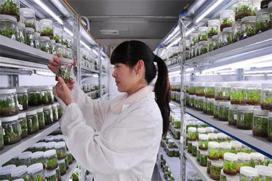铁皮石斛育苗方法