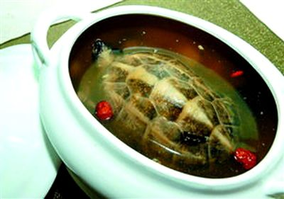 铁皮石斛洋参煲草龟