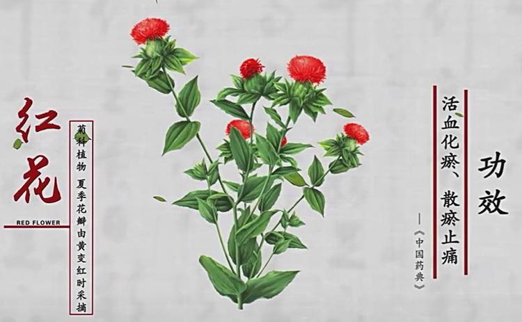視頻截圖 草紅花的故事
