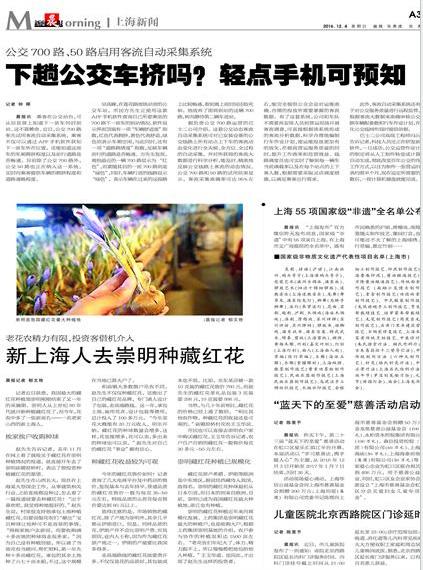 新上海人去崇明種藏紅花報紙圖片