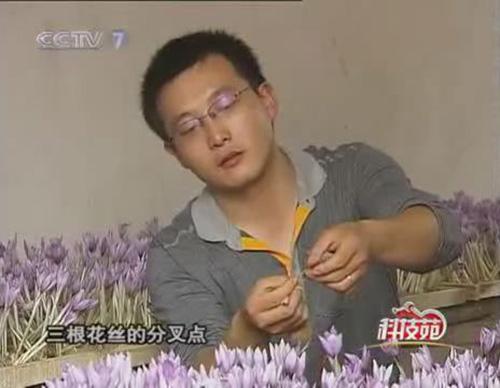 上海瀛洲西紅花種植專業合作社社長湯毓新
