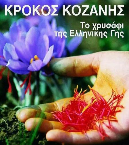 希臘藏紅花