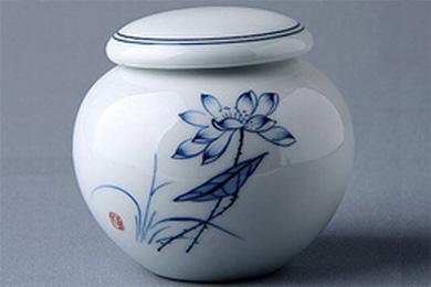 放在茶葉罐里曬干的鐵皮石斛居然能生根發芽?