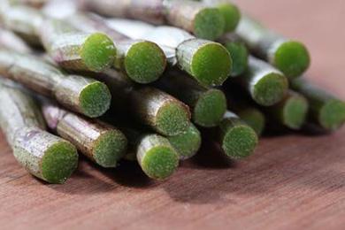 鐵皮石斛是放療修養時的最佳營養品