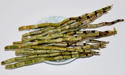 鐵皮石斛鮮條